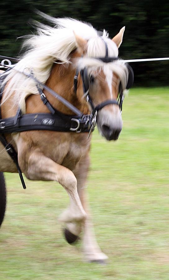 dag-van-aangespannen-paard-2011