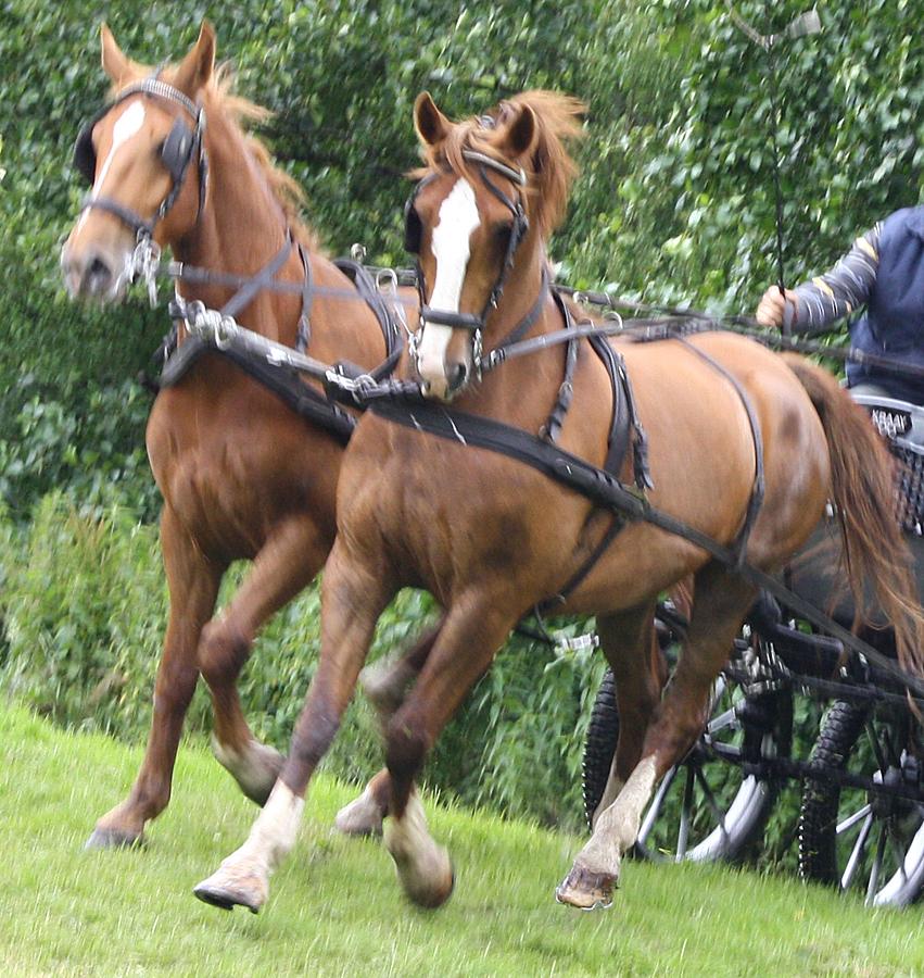 dag-van-aangespannen-paard-twee-span-2011