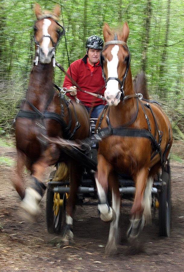 dag-van-aangespannen-paard-twee-span-bos