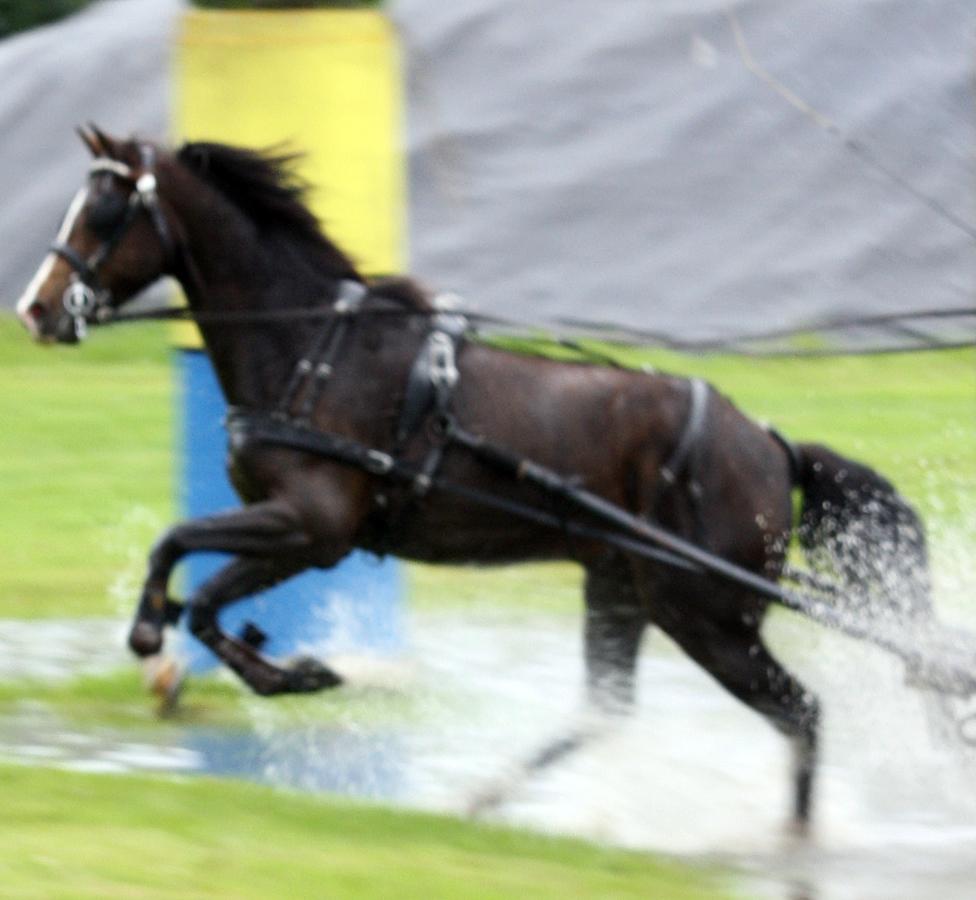 dag-van-aangespannen-paard-waterbak