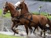 dag-van-aangespannen-paard-twee-span-waterbak