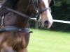 dag-van-aangespannen-paard
