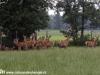 groep-edelherten-gemaakt-met-een-canon-1000-d