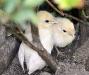 Fotografie Nijkerk holland kriel kuikens door Rick van den Hengel