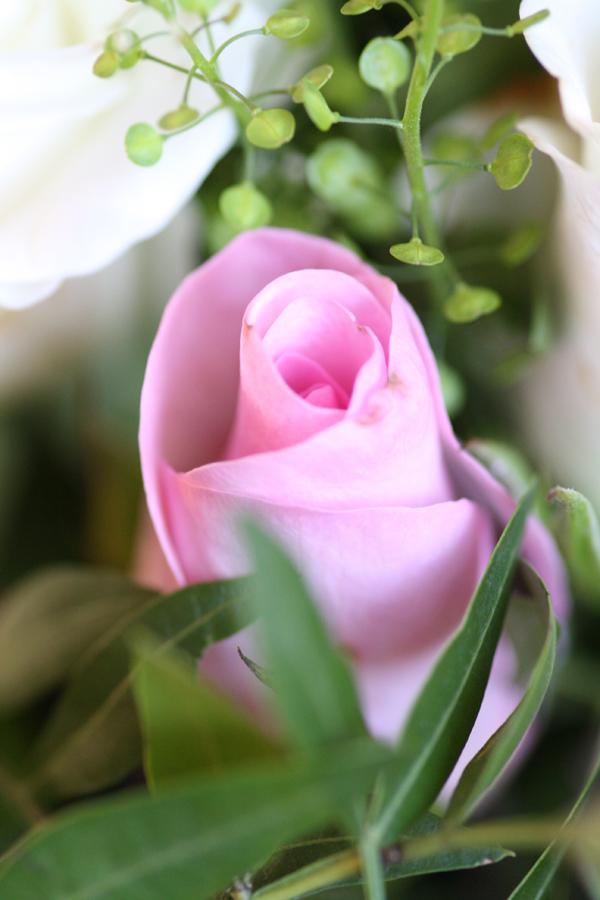 roze-roos-gemaakt-door-rick-van-den-hengel
