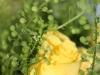 bloemstuk-met-gele-roos-gemaakt-door-rick-van-den-hengel