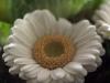 macro-bloem-boeket-door-rick