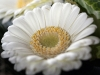macro-bloem-boeket