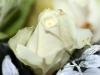 macro-witte-roos
