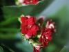 marcolens-bloemen