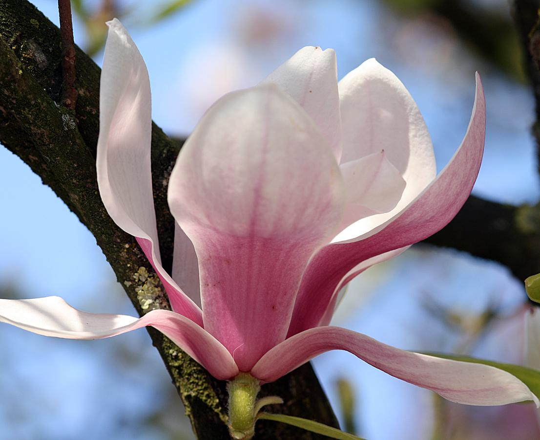 bloem-door-de-lens-van-rick-van-den-hengel