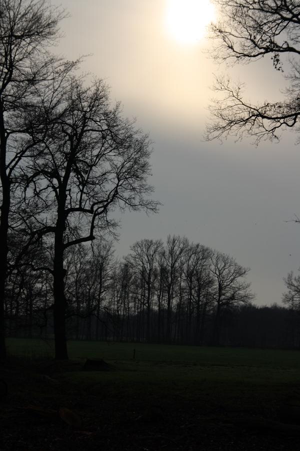 de-zon-in-oldenaller-door-de-lens-van-rick-van-den-hengel