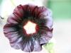 bloemen-01
