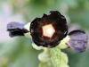 bloemen-02
