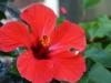 bloemen-2