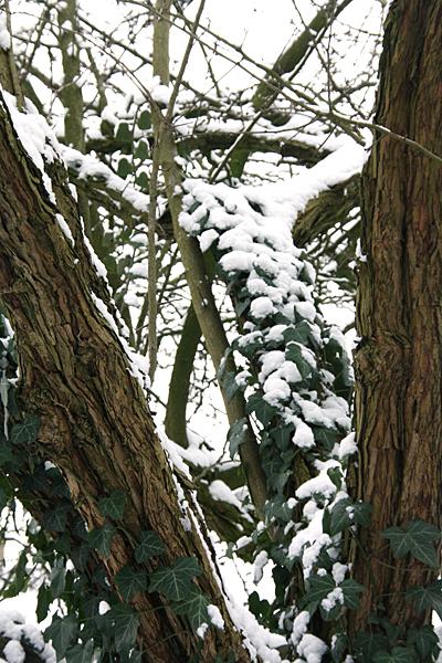 winter-natuurfotografie-01