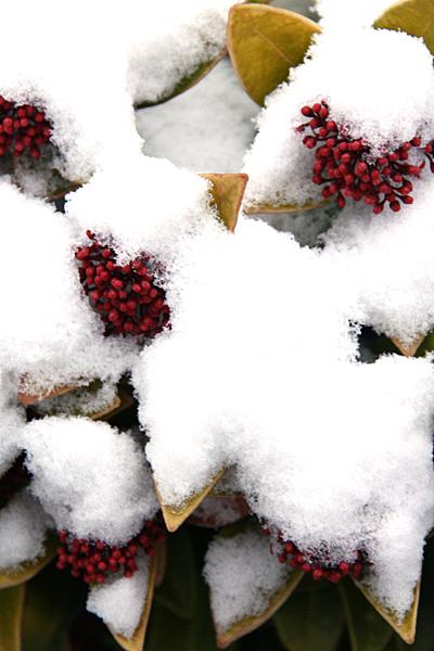 winter-natuurfotografie-03