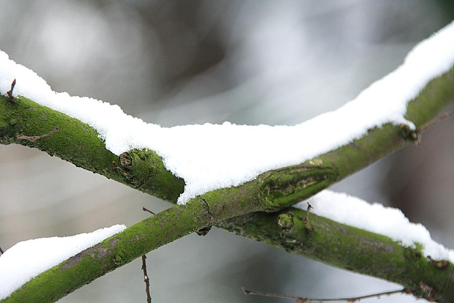 winter-natuurfotografie